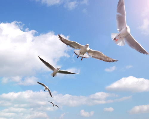 Birds flying at the sky