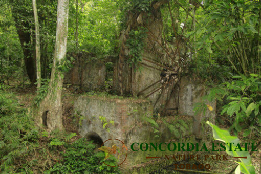 Concordia Estate: Adventures to Enjoy